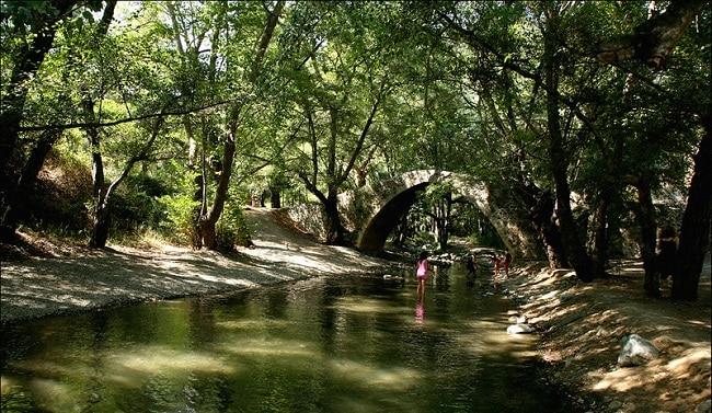 ילדים משחקים בגשר Tzielefos  ביער פאפוס