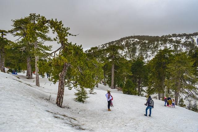 עצים בשלג בטרודוס