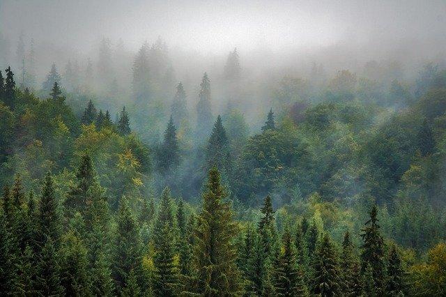 יער אורנים בטרודוס