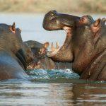 מערת המאובנים של ההיפופוטמים באיה נאפה – Paleontological Cave of Hippopotamus