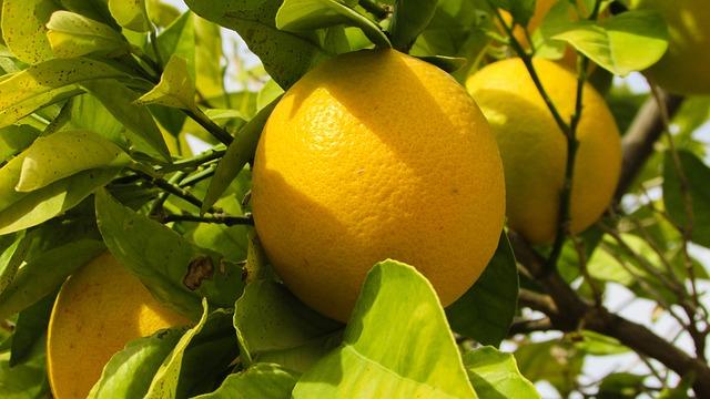 תפוז קפריסאי