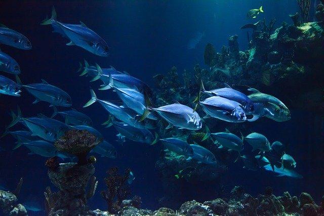 דגים באווריום של פרוטאראס
