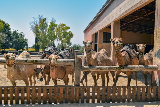 פארק הגמלים בקפריסין