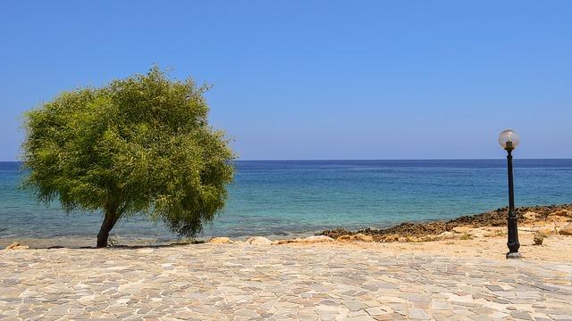 מפרץ עץ התאנה, פרוטראס