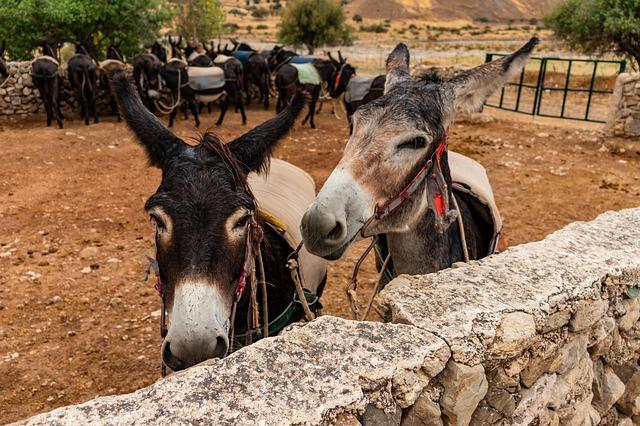 חוות החמורים בכפר קלאוקדרה - kelokedara