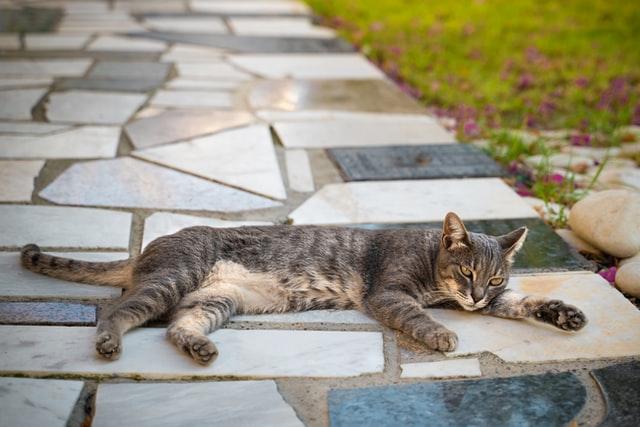 חתול מתחרדן בשמש