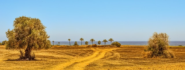 עצים ושדה בפאתי הכפר מזוטוס ליד הים