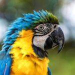 גן החיות פארק מליוס Melios – מקום מדהים עם ציפורים ובעלי חיים מכל העולם